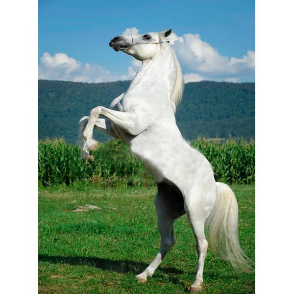 """Картина по номерам """"Белый конь"""""""