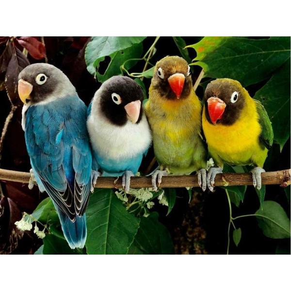 """Картина по номерам """"Волнистые попугайчики"""""""